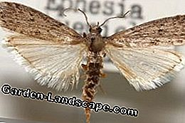 Fighting house pests: moths