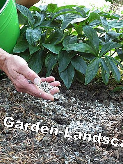 Provide the soil with sufficient nutrients