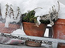 Balcony plants also need winter protection