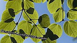 Keep the pie tree in the bucket - notes on substrate and fertilizer