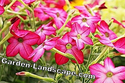 Flowers, perennials & summer flowers: garden