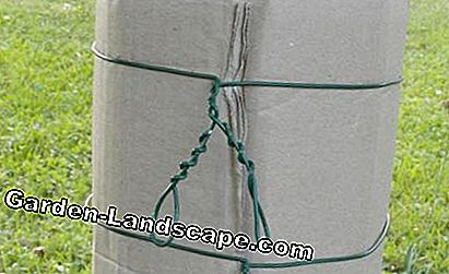 Corrugated belt against codling moth