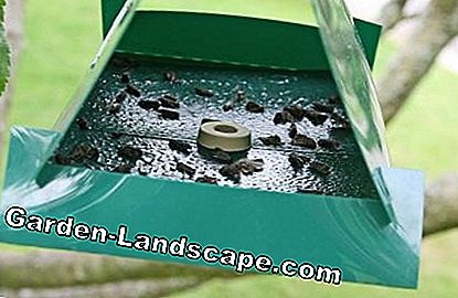 Pheromone trap for codling moth