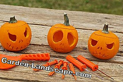Pumpkin Carving Tool