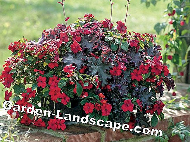 Purple Bells: Autumnal Plant Ideas for Pots: pots
