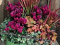Purple Bells: Autumn Plant Ideas for Pots: bellen