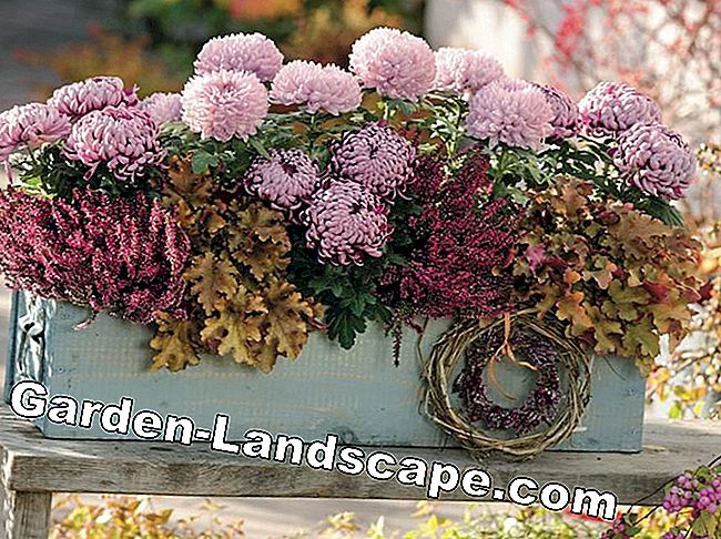 Purple Bells: Autumn Plant Ideas for Pots: plant