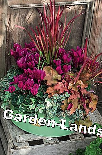 Purple Bells: Autumn Plant Ideas for Pots: purple