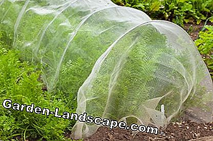 Vegetable protection net in the carrot bed