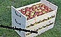 Apple stalk, fruit box