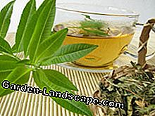 You can eat the lemon verbena