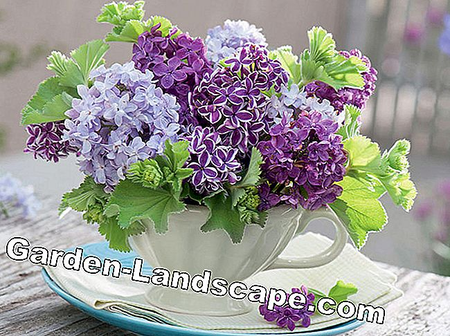 Lilac: scented vase jewelry: lilac