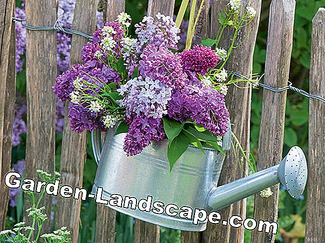 Lilac: scented vase jewelry: jewelry