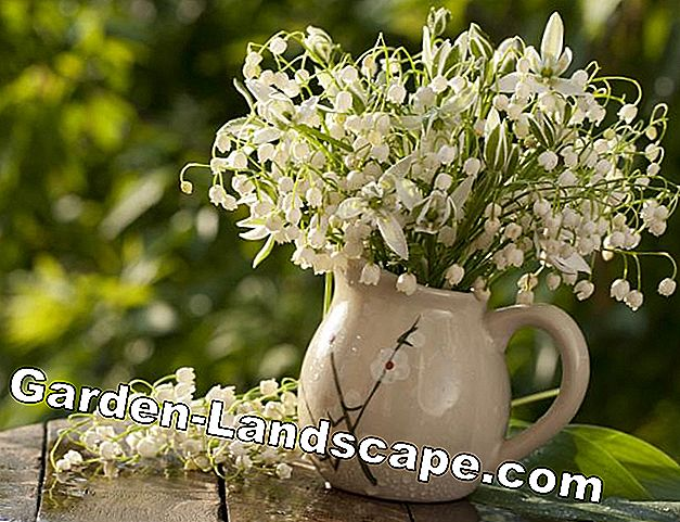 Lily of the valley in the vase