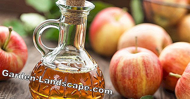 Wonder drug apple cider vinegar