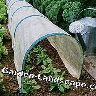 Plant trough for vegetable cultivation