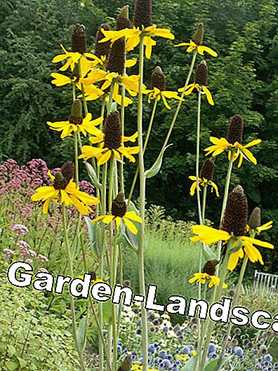 Prairie garden: stones, grasses, colorful flowers: Colorful