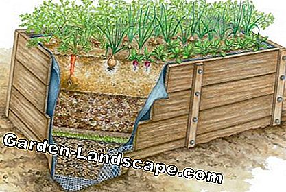 Raised bed layers