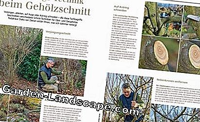 Read sample MSG January 2017 Pruning