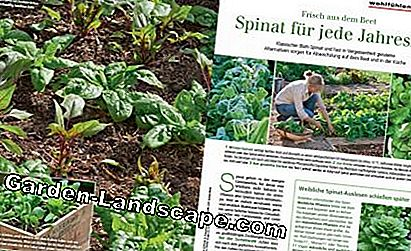 Sample MSG January 2017 Spinach