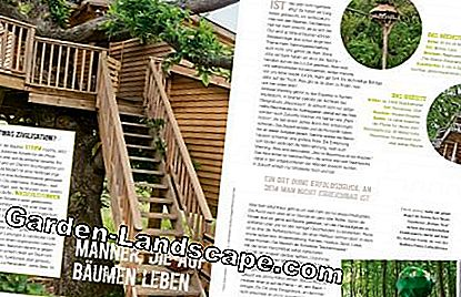 Article page Treehouse