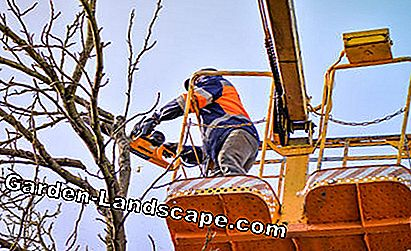 Tree pruning, tree care work