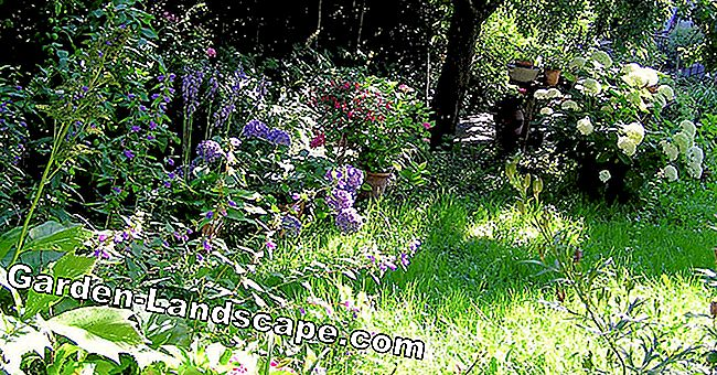 Plants for half shady and shady places