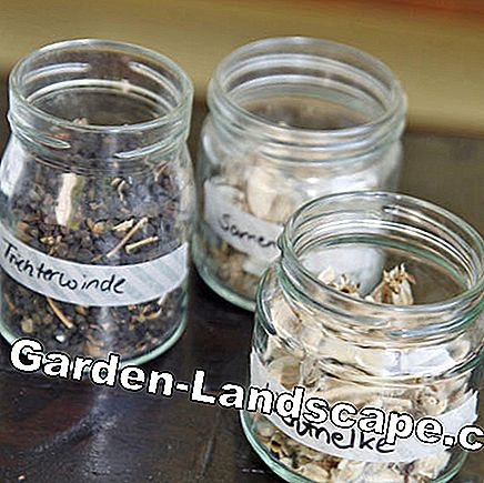 Store flower seeds