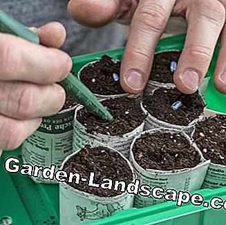 Sowing in homemade paper pots