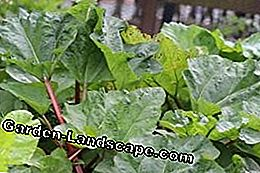 Vegetable garden & vegetables: plants