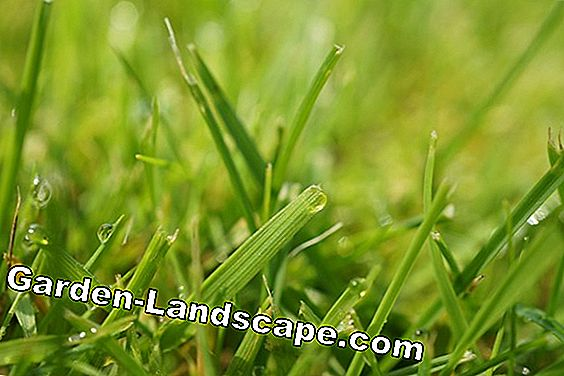 Meadow - lawn - grass